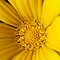 PHOTOGRAPHY OF YELLOW FLOWER IN MACRO