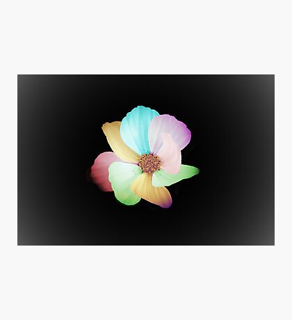 Colors Flower Photographic Print