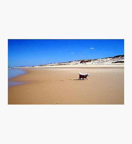Dog on the beach Photographic Print