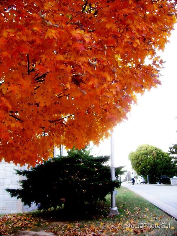 Orange by IowaPhotoGal