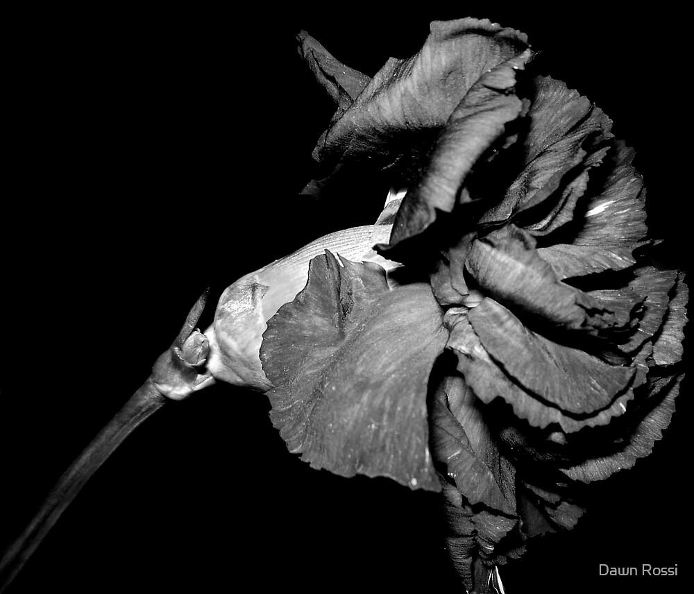 flower by Dawn Rossi