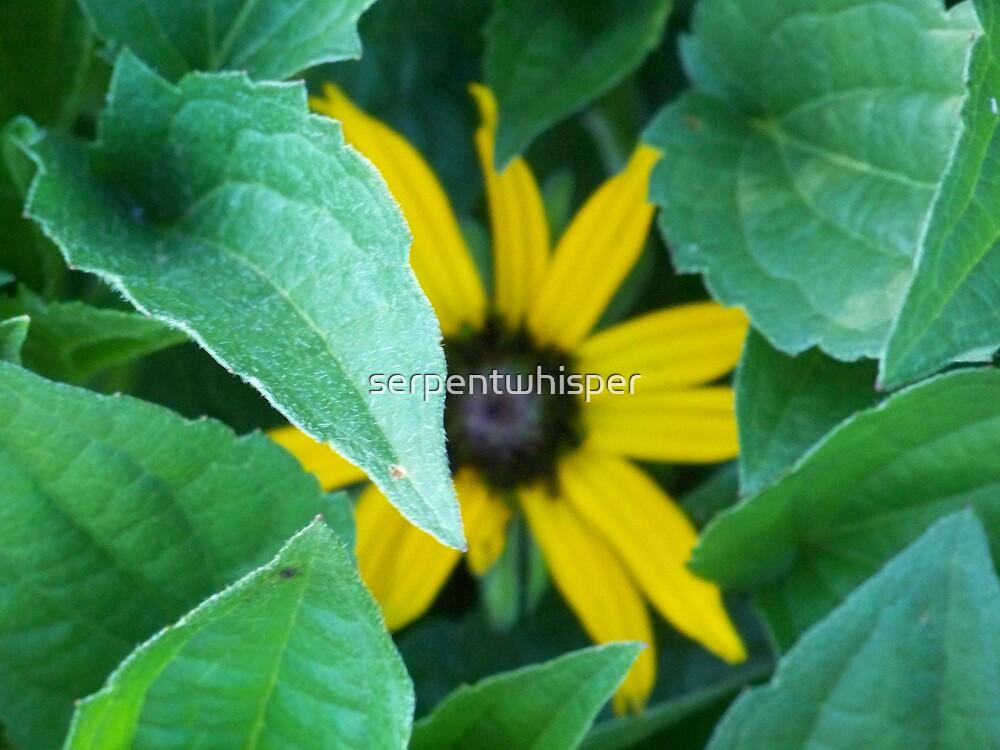 Sometimes, It's Not About the Flower by serpentwhisper