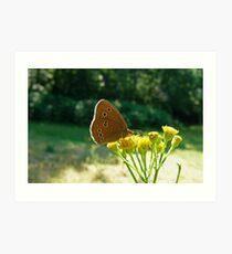 Ringlet Butterfly Art Print