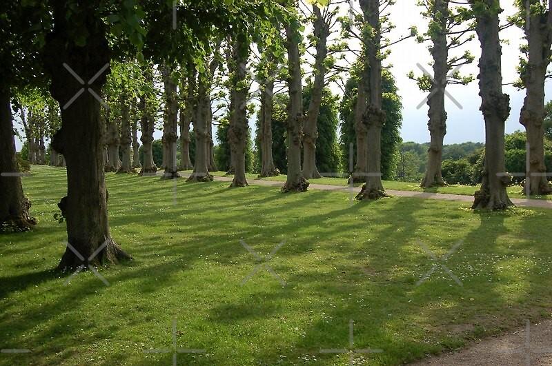 Road between the trees by loiteke