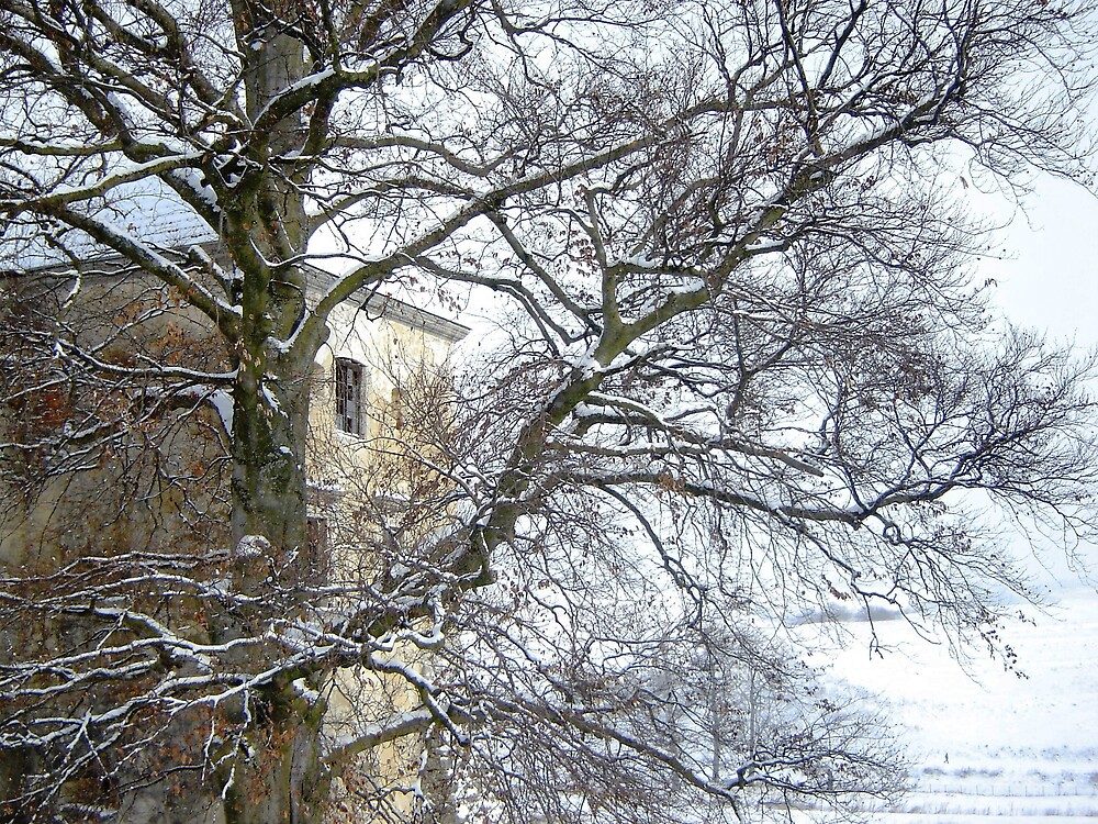 Old tree by Mykola