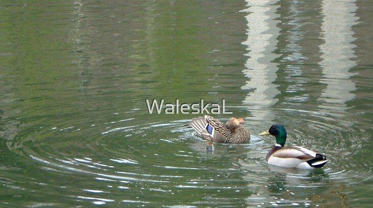 Ducks Ponding Together by WaleskaL