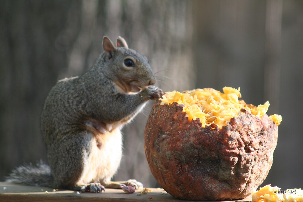 Another pumpkin eating squirrel by alina98