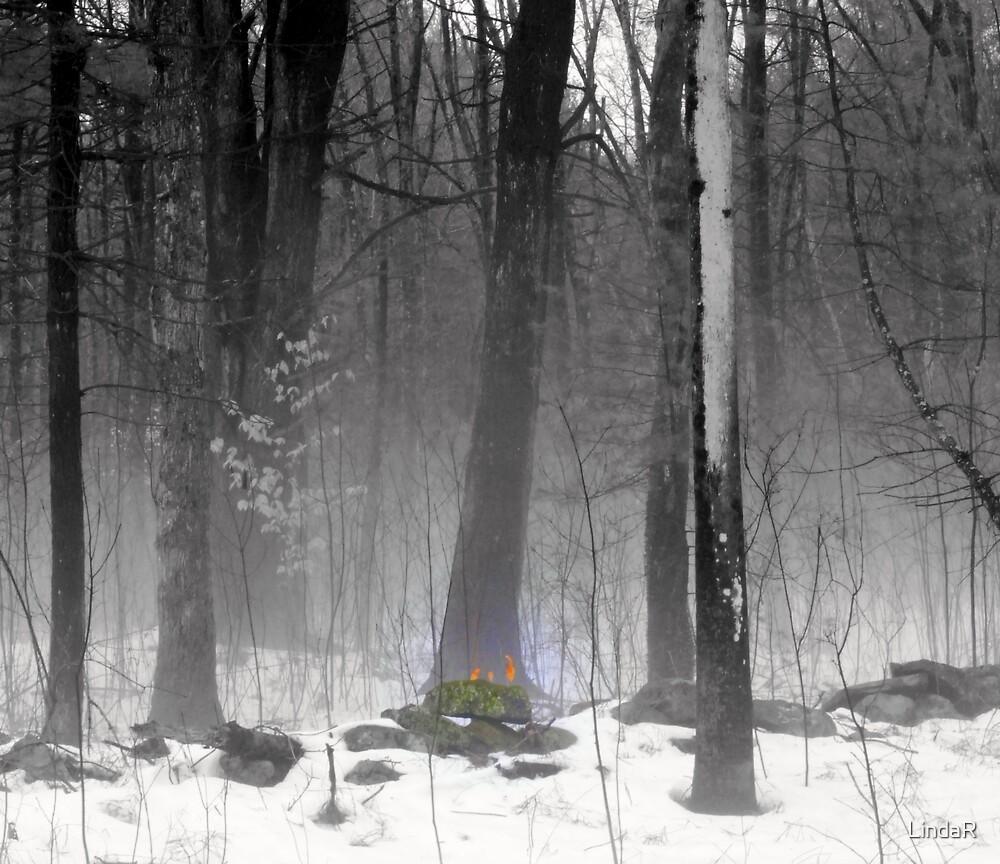 Old Flame... by LindaR