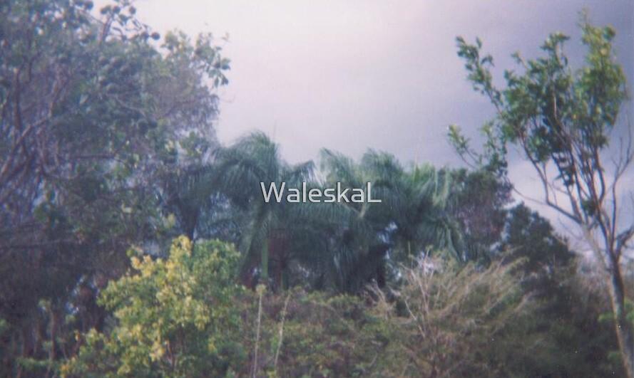 La Vega, Dominican Republic by WaleskaL