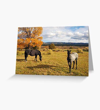 Fall Horses Greeting Card