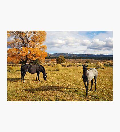 Fall Horses Photographic Print