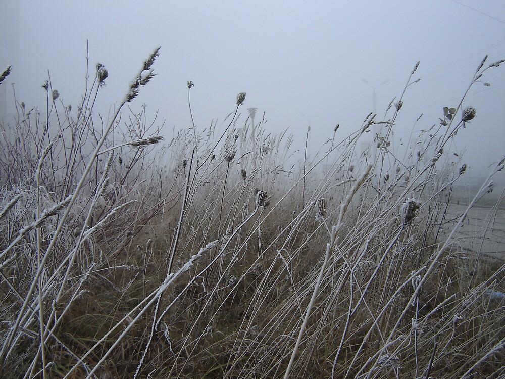Frosty morning by Mykola