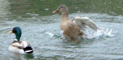 Pretty Splash by WaleskaL