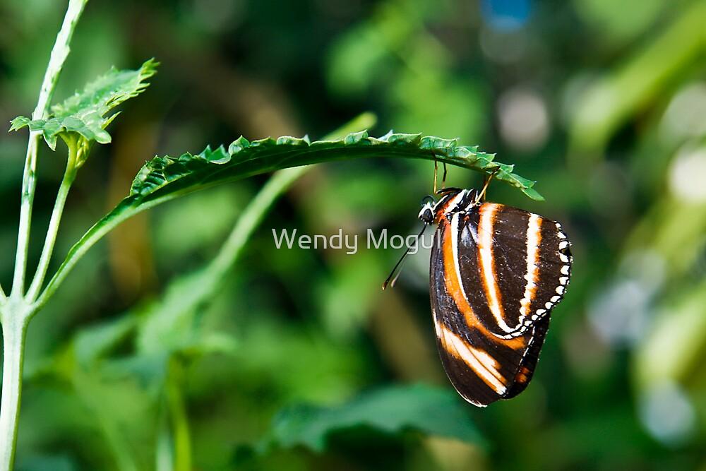 Just Hangin Around!  by Wendy Mogul