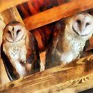 Two Barn Owls by Susan Savad