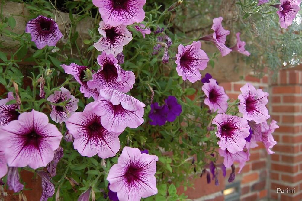 Violets by Parimi