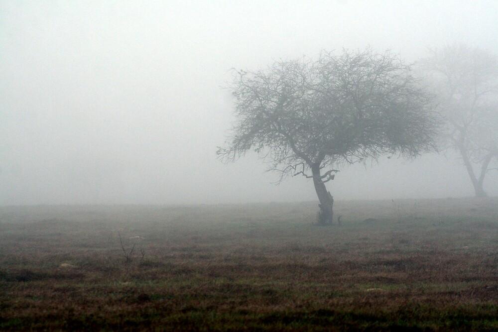 Misty Morning by KerrieT