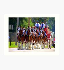Budweiser Crew & Clydesdale Horses Art Print