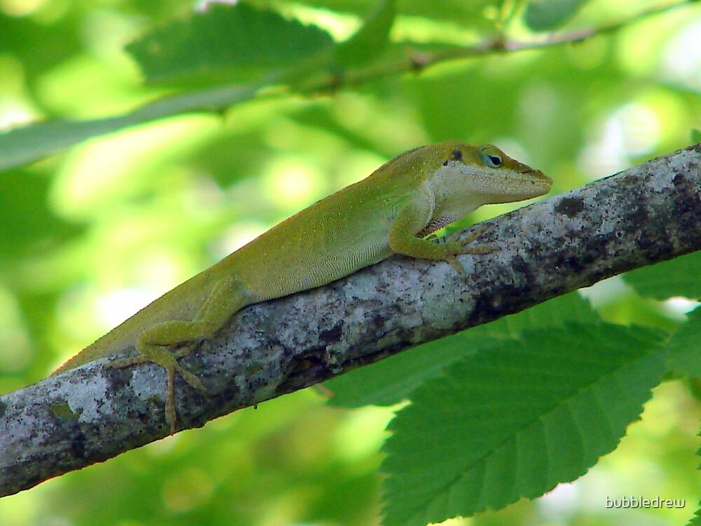 Lizard On A Limb by bubbledrew