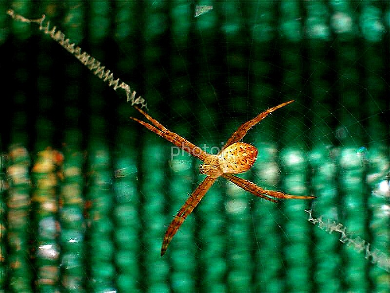 photoj Bug- 'Spider, Hang on For Dear Life' by photoj