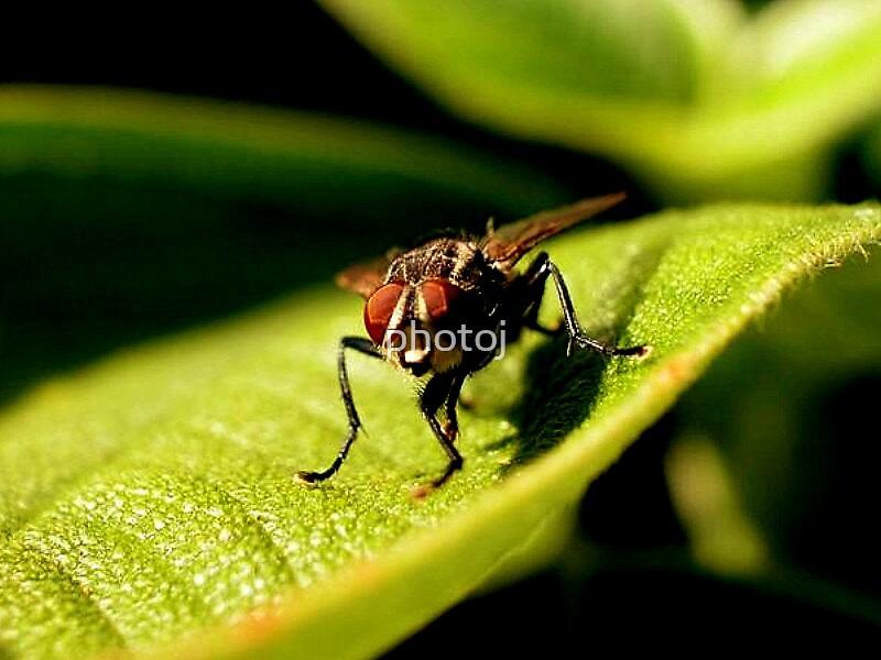 photoj Bug, Showing Of! by photoj