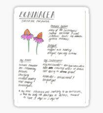 Medicinal Benefits of Echinacea Sticker
