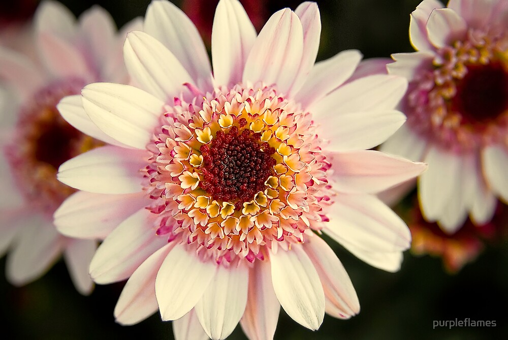 Flower Jam by purpleflames