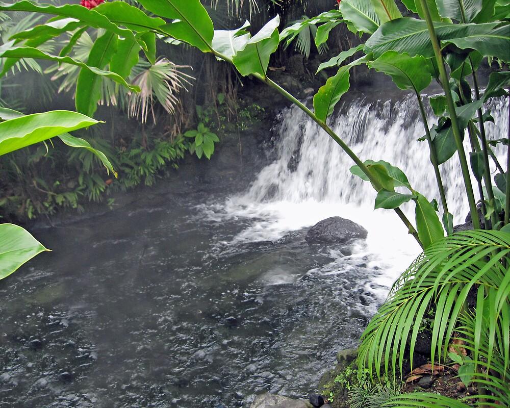 Backyard Stream by Chitrakar