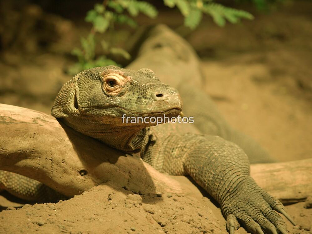 Komodo Dragon by Franco De Luca Calce