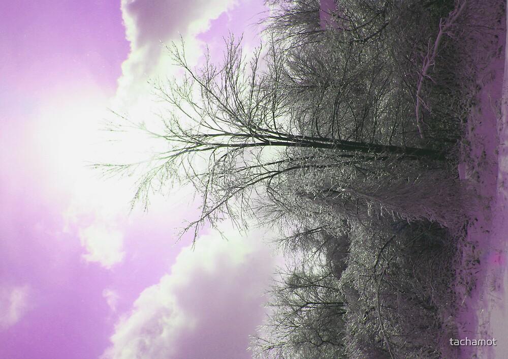 PURPLE SKY by tachamot