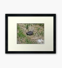 Black Suitcase Lost in the Field Framed Print
