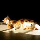 Jumper....After The Cat Nip by Diane Arndt