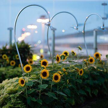 Sunny Outlooks by sssealegs