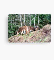 """""""Black Tail Deer"""" Canvas Print"""