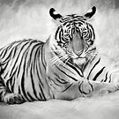 Tiger cub at rest by Pravine Chester