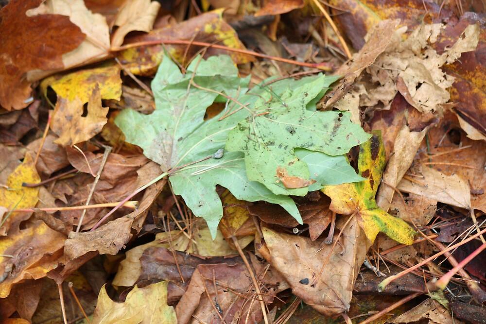 Last flash of green by MurrayB