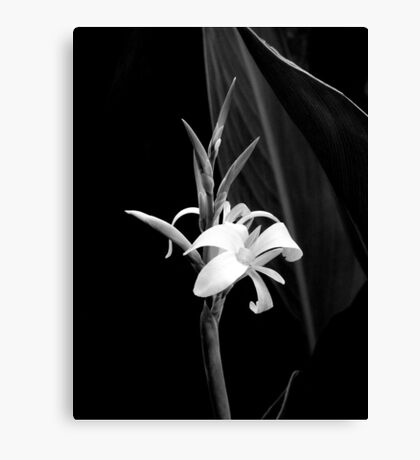 Canna Lily in Black & White Canvas Print