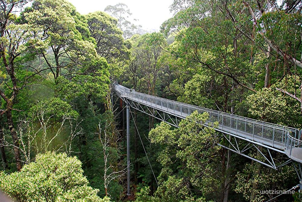 Tree Walk - Otway Fly - Victoria Australia by wotzisname