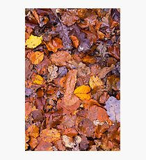Autumn fallen leaves background  Photographic Print