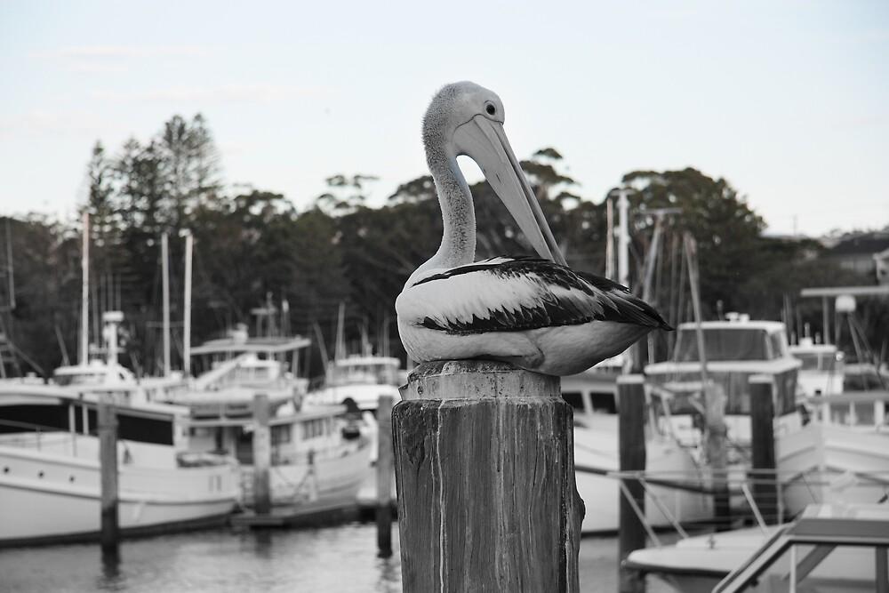 Sticky Beak by Stephen Denham