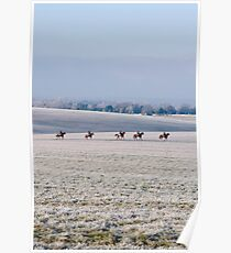 frosty horses Poster