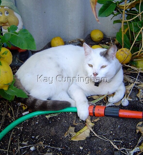 Casper!  I'll tend to the watering! by Kay Cunningham