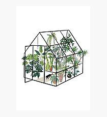 Lámina fotográfica invernadero con plantas