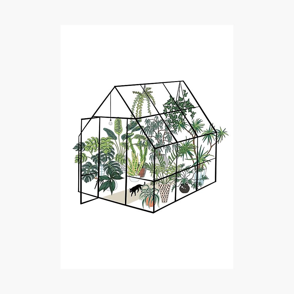 invernadero con plantas Lámina fotográfica