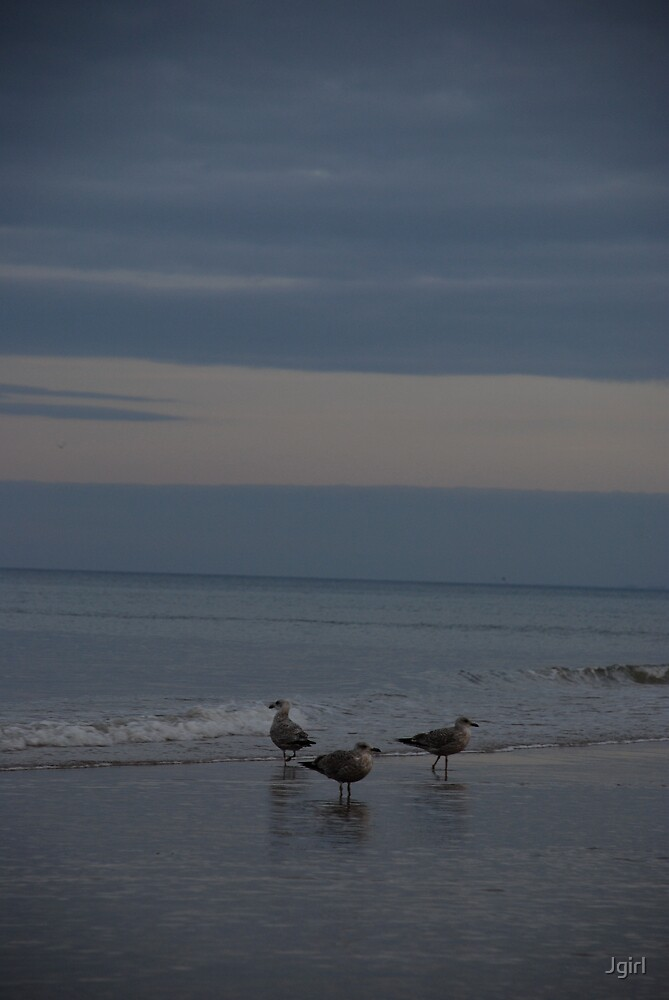 Seagulls on a beach in Normandy by Jgirl