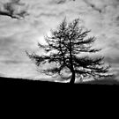Haunted Tree by therightprofile