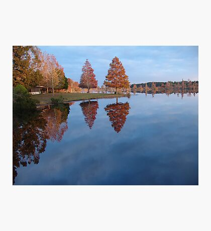 Cypress on Point - Autumn Photographic Print
