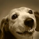 Dogs Smile Too by Micalyn