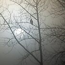Eagle in the fog by JWallace
