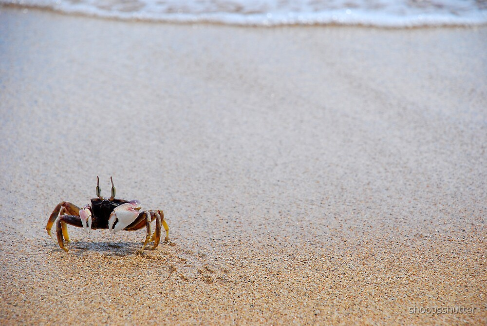 Crabby by shoopsshutter